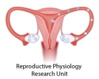Reproductive Physiology Unit